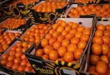 frutta e verdura arancione