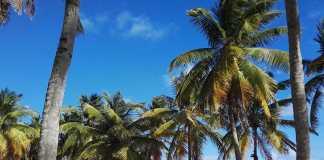Caraibi-piccole-Antille